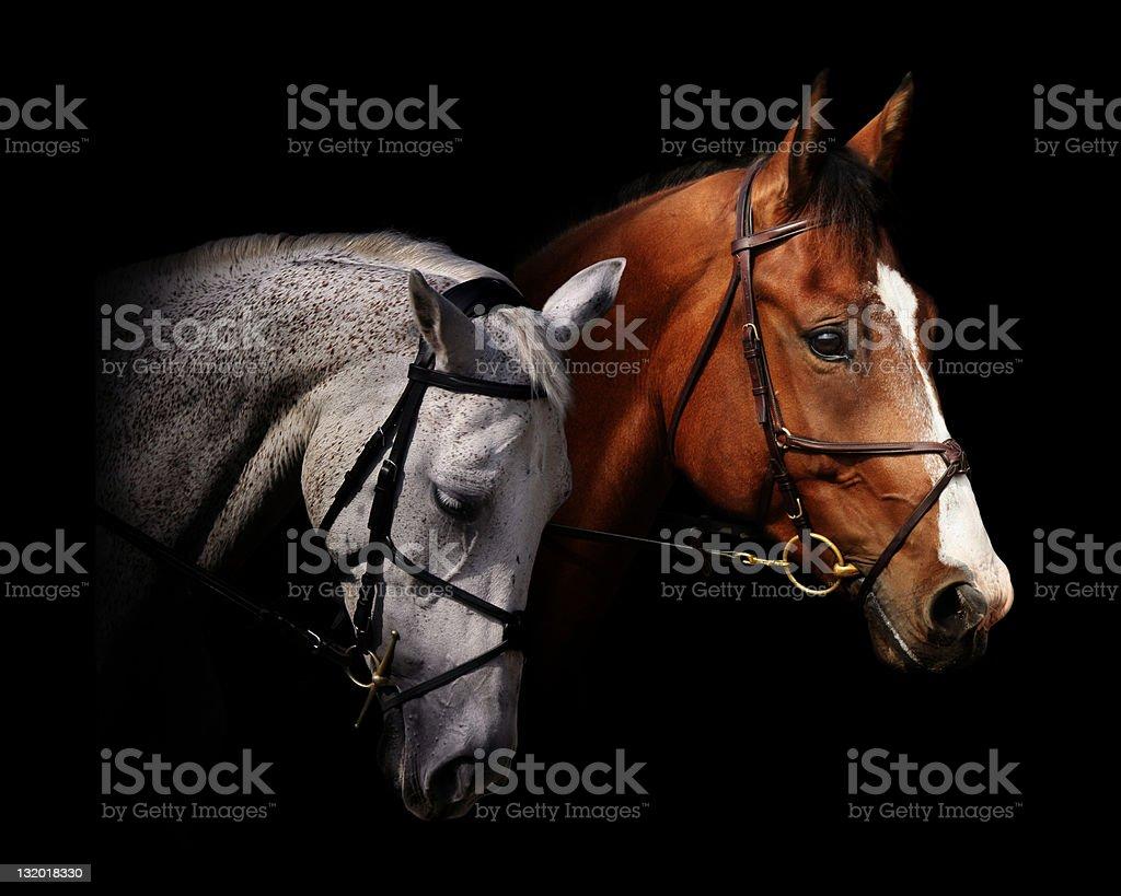 couple of horses stock photo