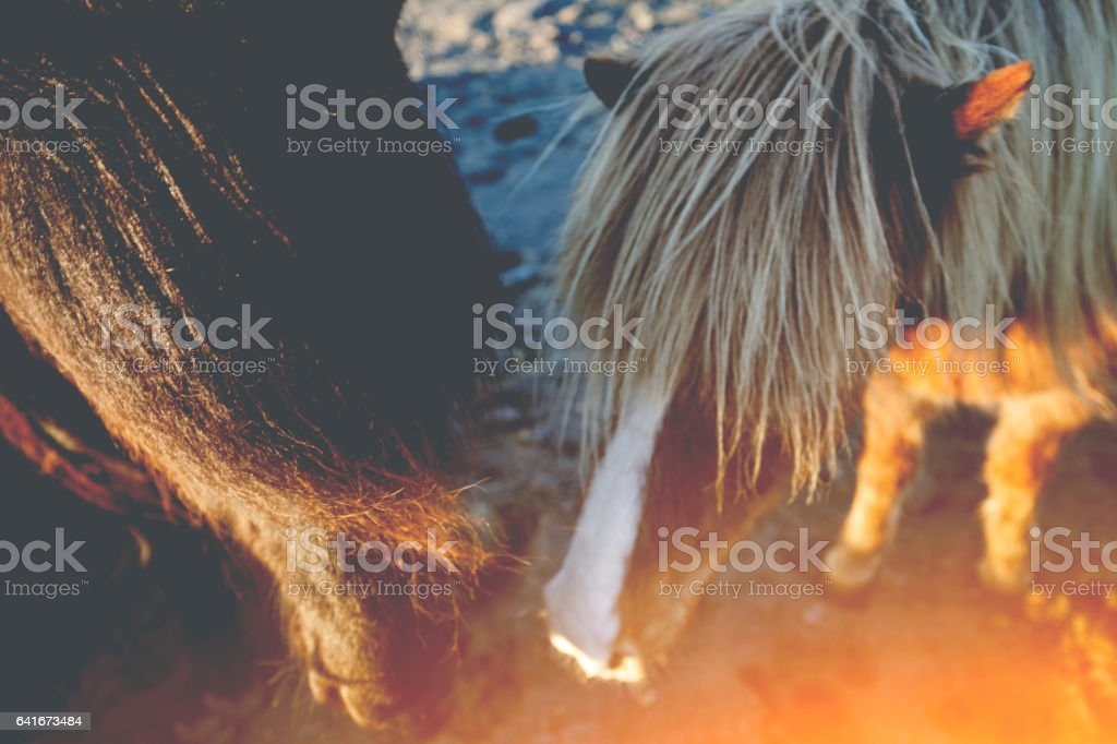 Couple of horses stock photo