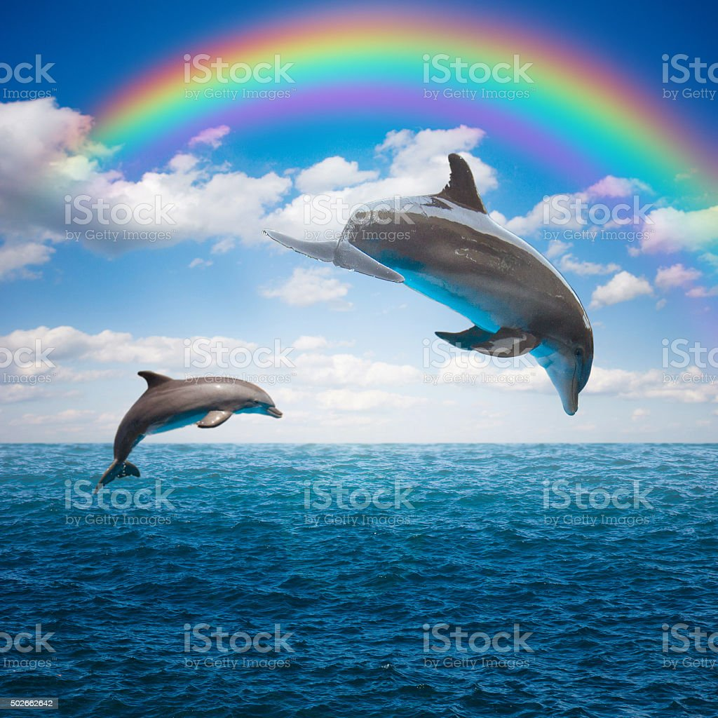 couple of jumping dolphins stock photo