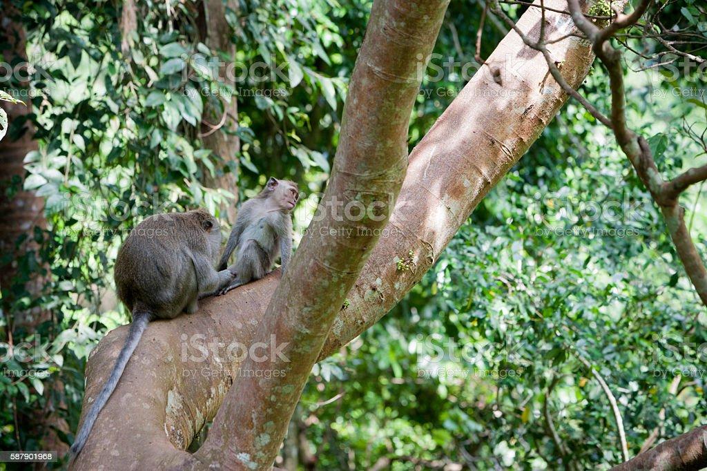 couple of monkeys stock photo