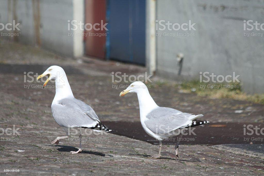Couple of sea gulls stock photo