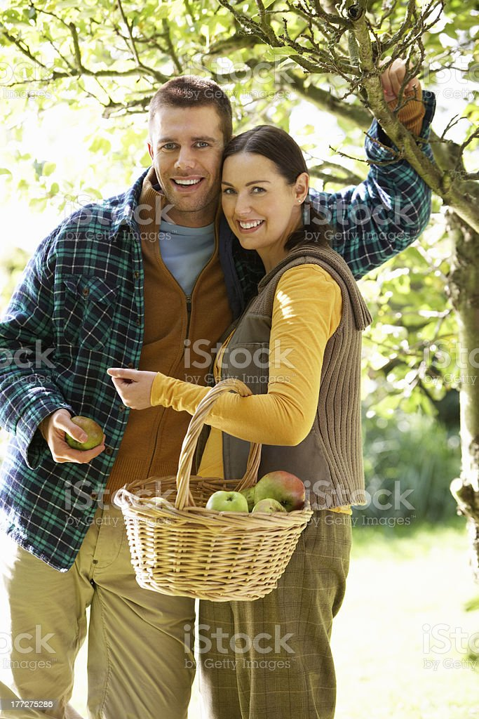 Couple picking apples in garden royalty-free stock photo