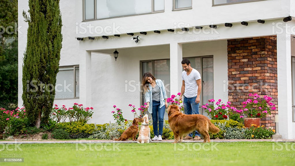 Couple playing outdoors with their dogs stock photo