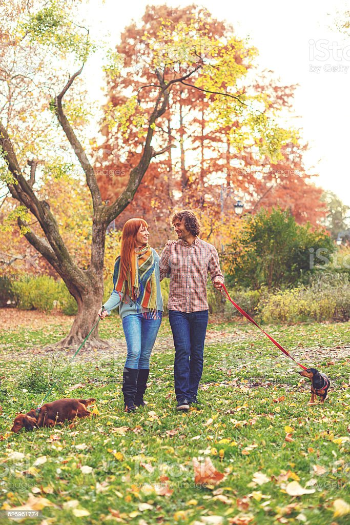 Couple running dogs in park on autumn day stock photo