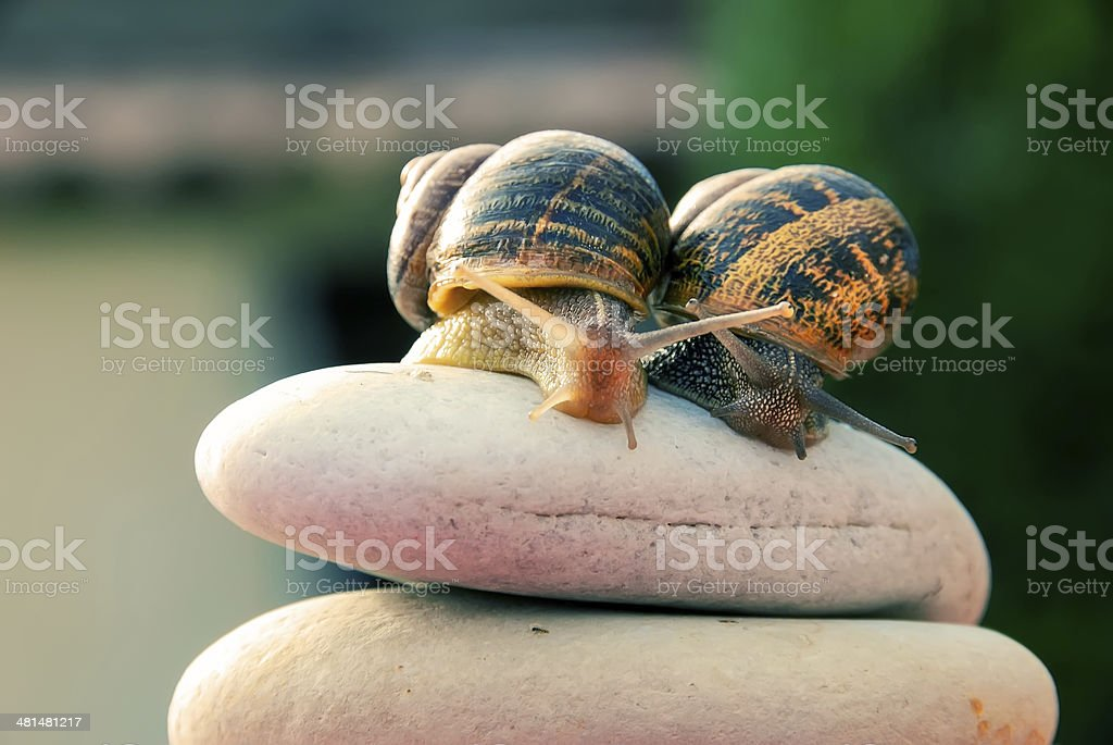 couple snail on a pebbles mountain royalty-free stock photo