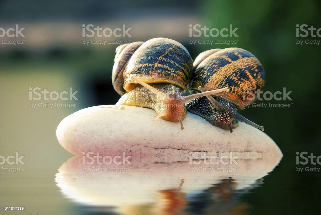 couple snail on a pebbles mountain royalty-free stock photo