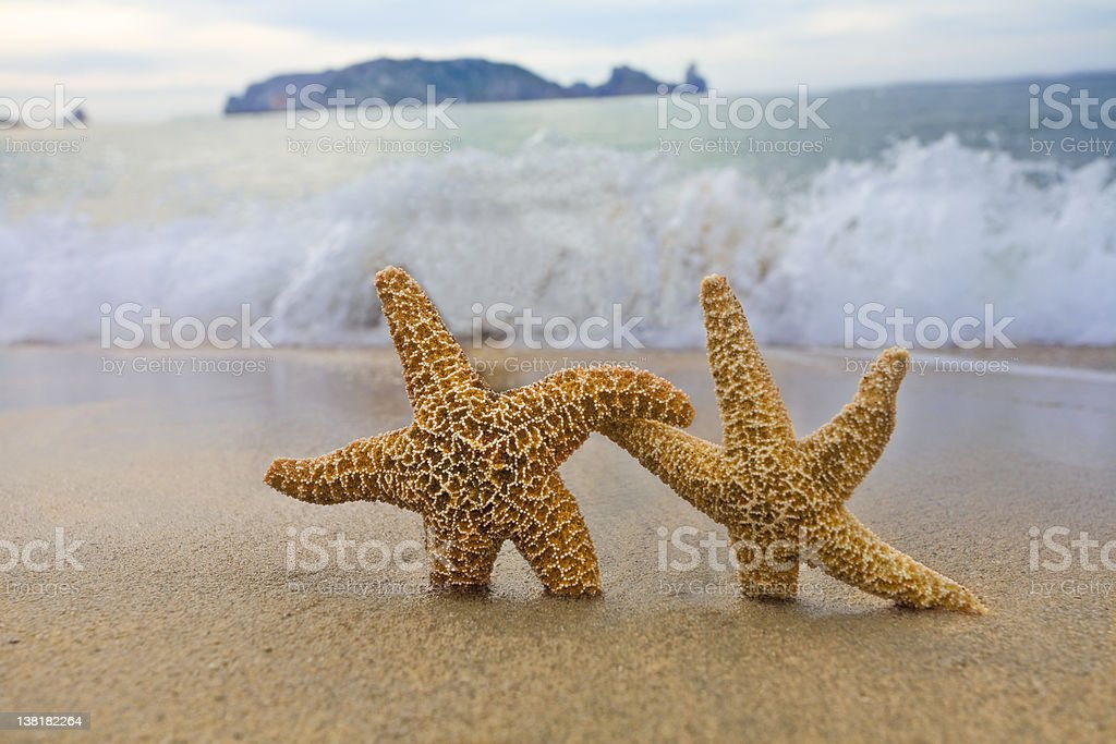 Couple starfish running away from wave stock photo