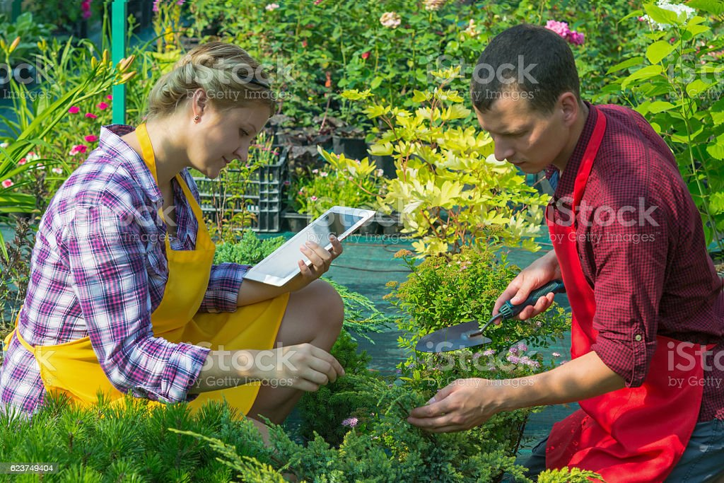 couple takes care of the plants stock photo