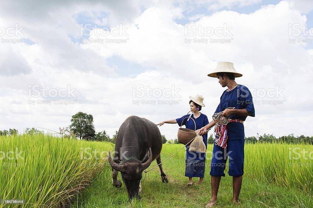 Couple Thai Farmer with buffalo royalty-free stock photo
