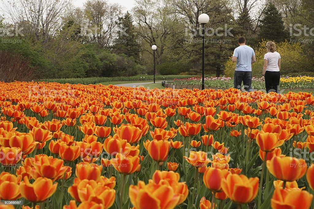 Couple Walking Amoung Tulips royalty-free stock photo
