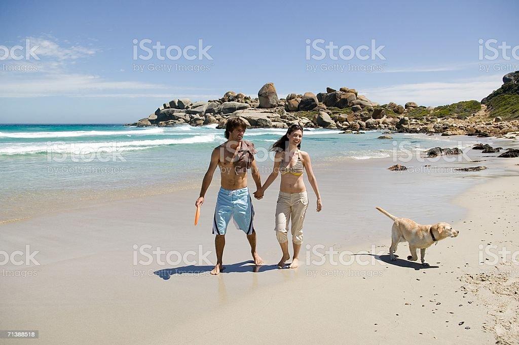 Couple walking labrador on the beach stock photo