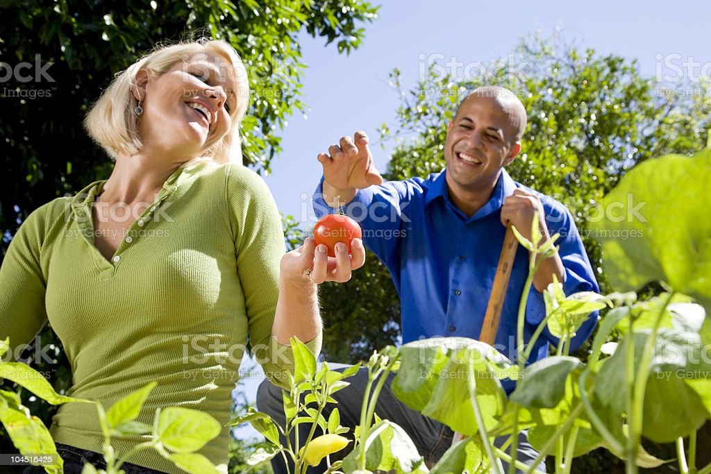 Couple working on vegetable garden in backyard royalty-free stock photo