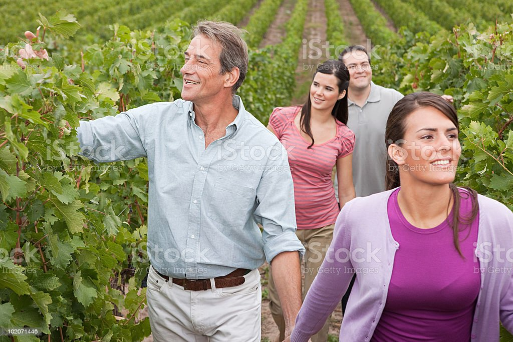 Couples in a vineyard royalty-free stock photo