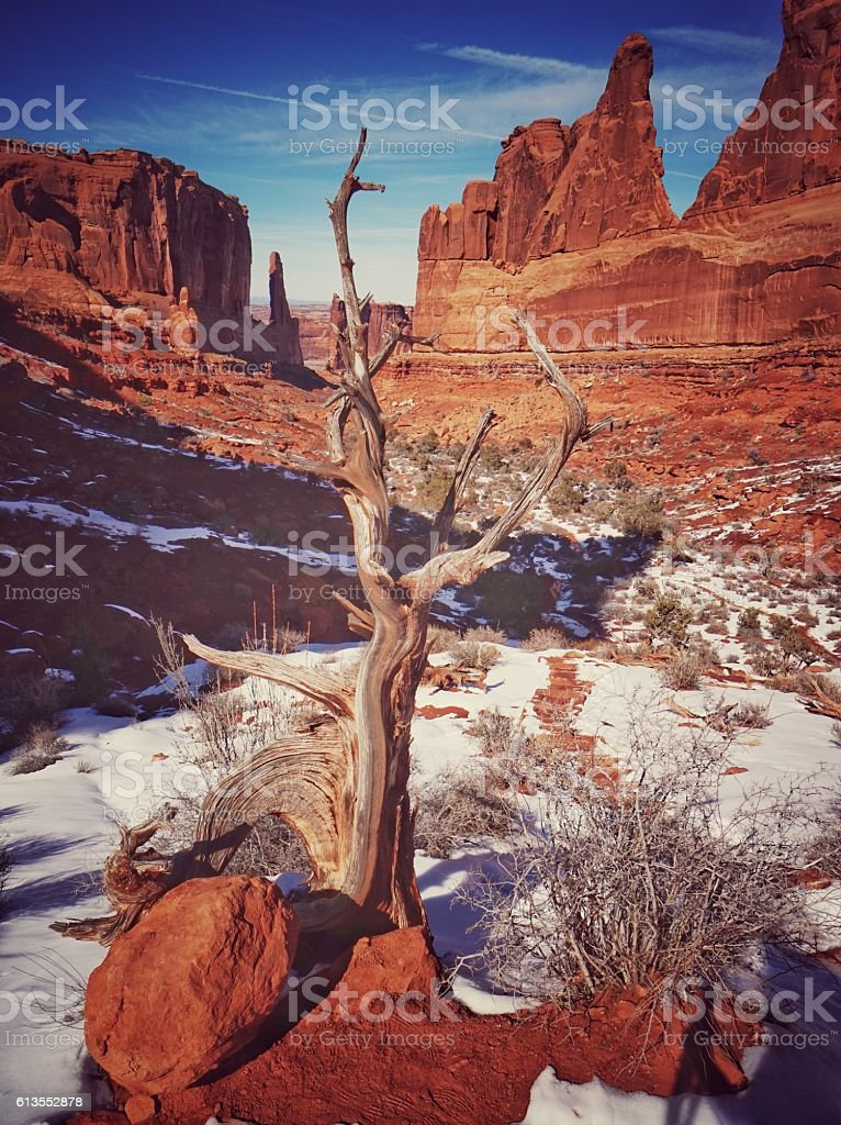 Courthouse Towers, Park Avenue, Twisted Juniper Tree Arches stock photo