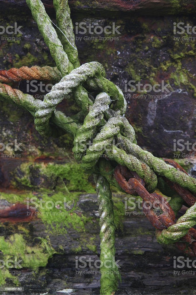 Covered in seaweed knot stock photo