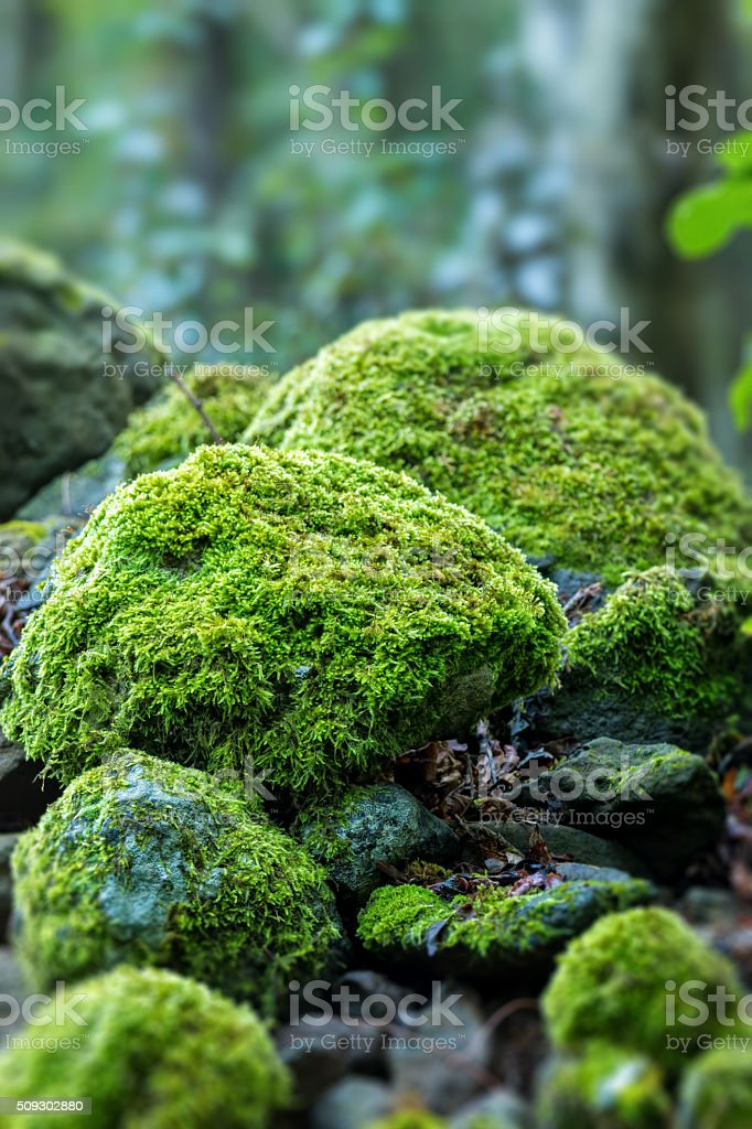 Covered rocks with moss stock photo
