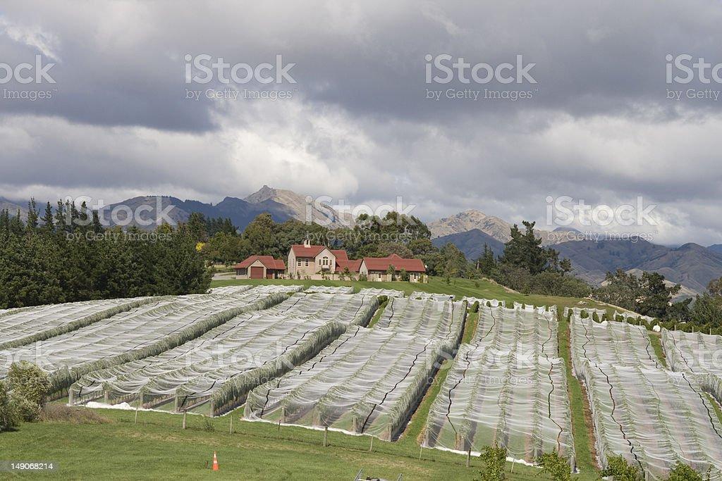 Covered vineyard stock photo