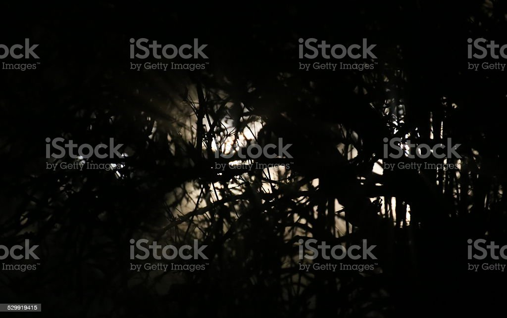 Covered White Light In Forest stock photo