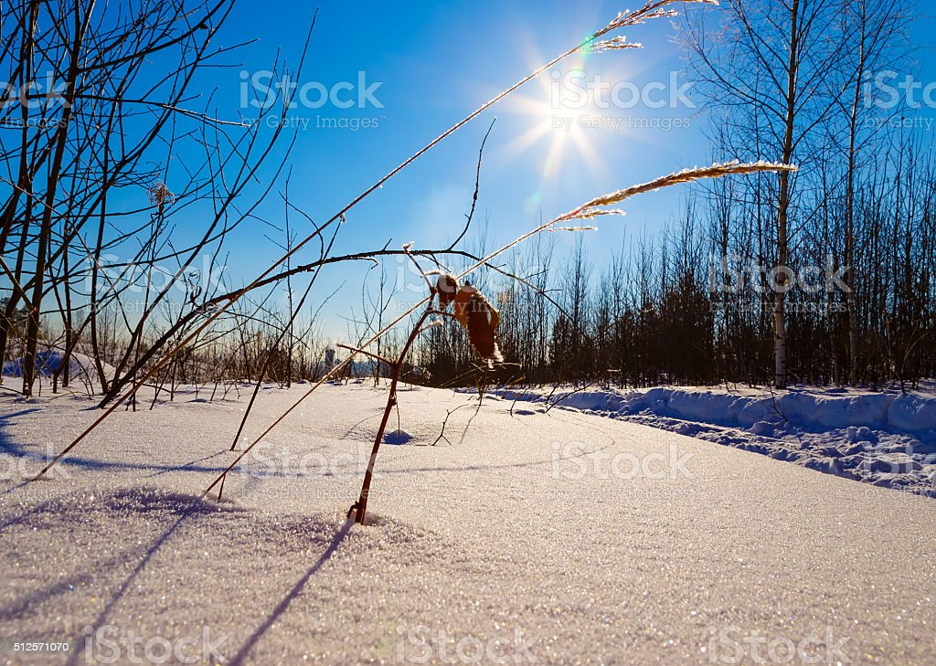 covered with frost grass on background of  sun winter day stock photo