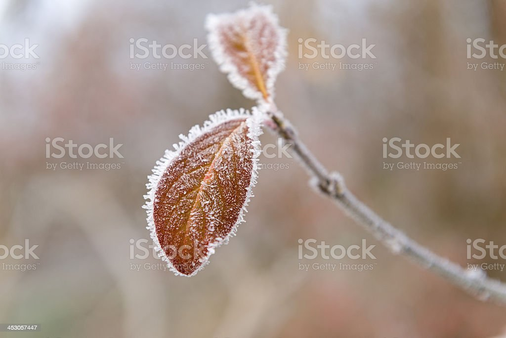 covered with frost royalty-free stock photo