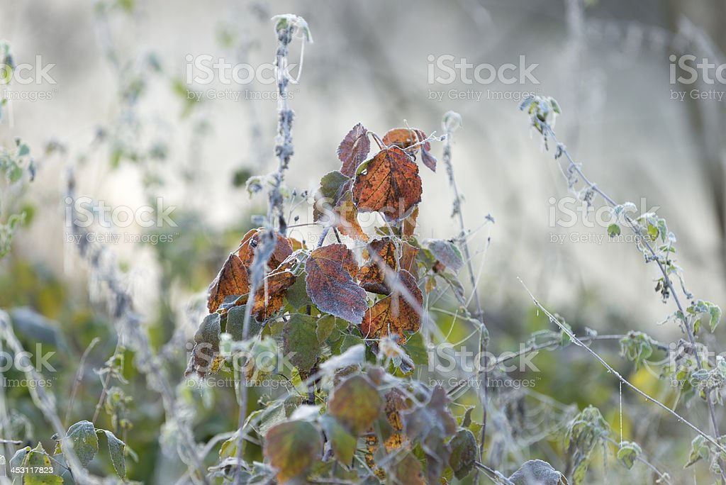 covered with frost stock photo