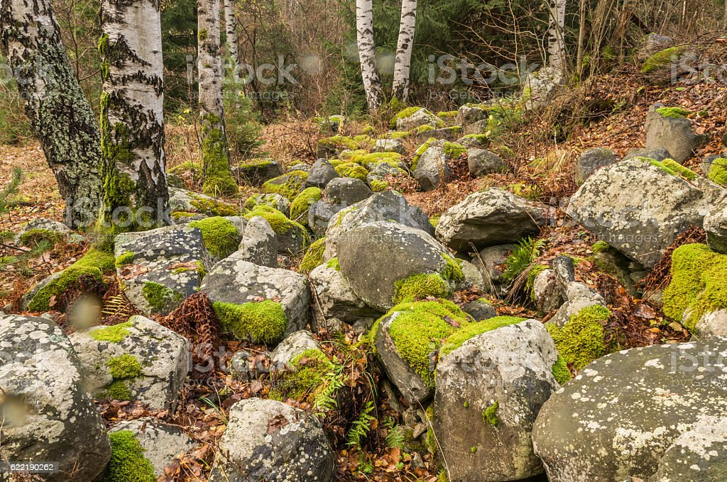 Covered with moss rocks and tree stock photo