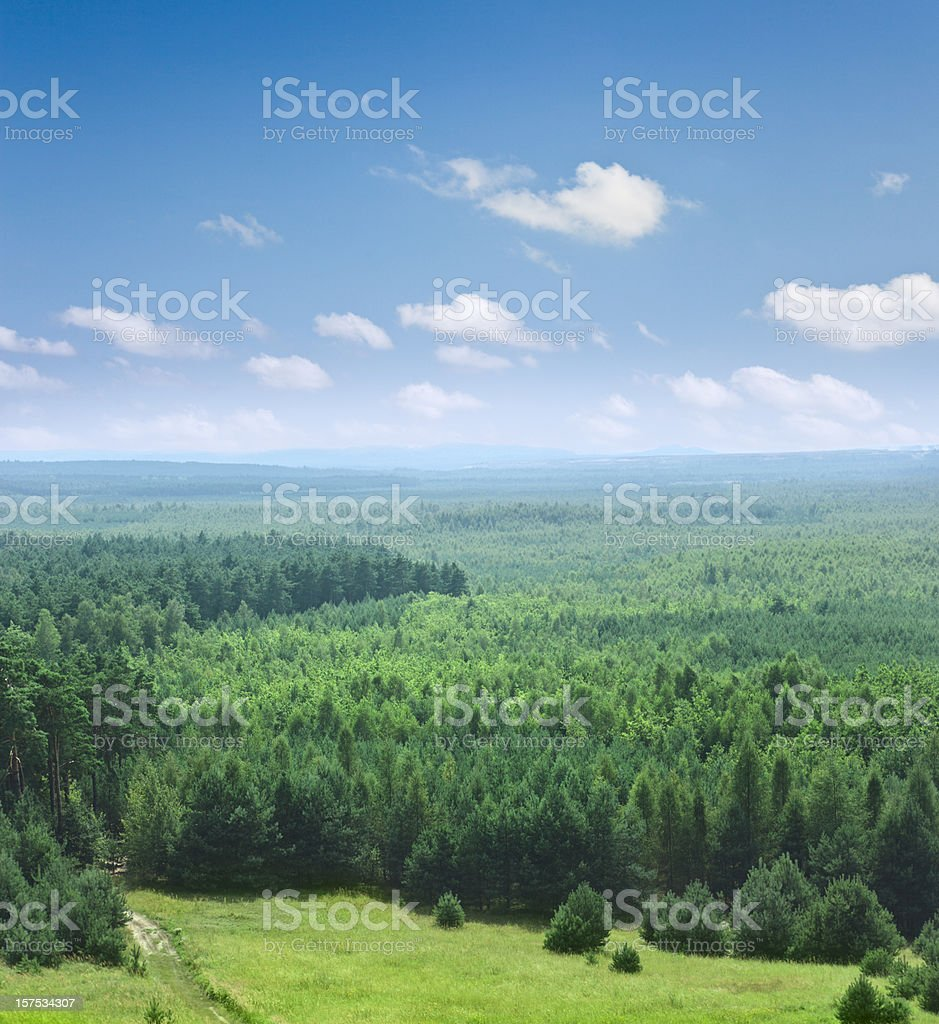 Covered with trees part of Bledowska desert in Krakow, Poland royalty-free stock photo