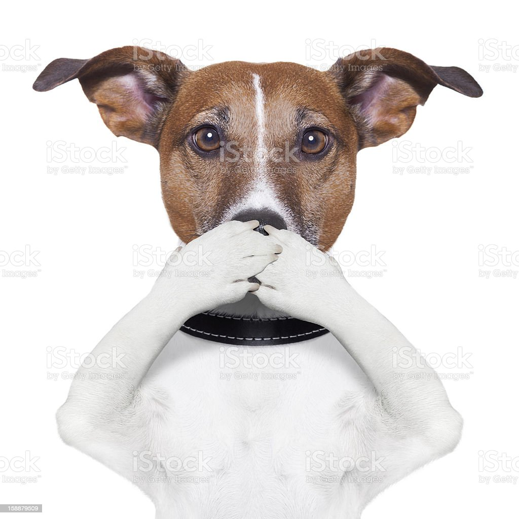 covering mouth dog stock photo