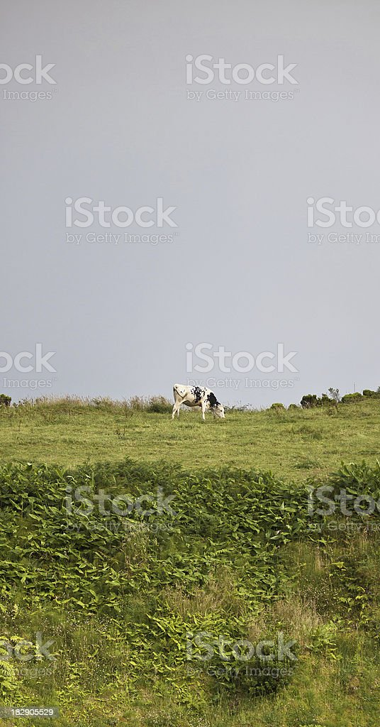 Cow against grey sky royalty-free stock photo
