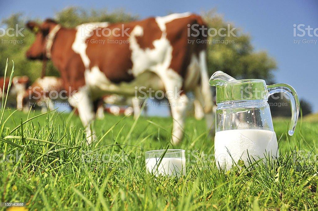Cow and jug of milk. Emmental region, Switzerland stock photo