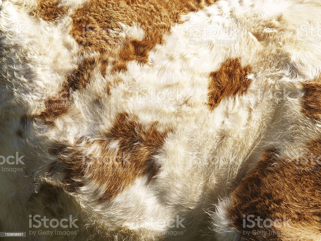 cow background,, detail stock photo
