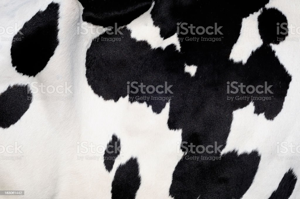 Cow background stock photo