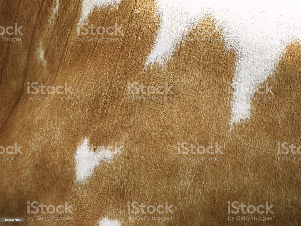 cow background,  with heart shape stock photo