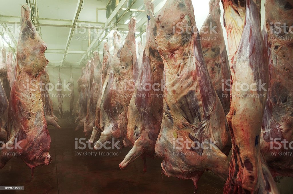 Cow carcasses stock photo