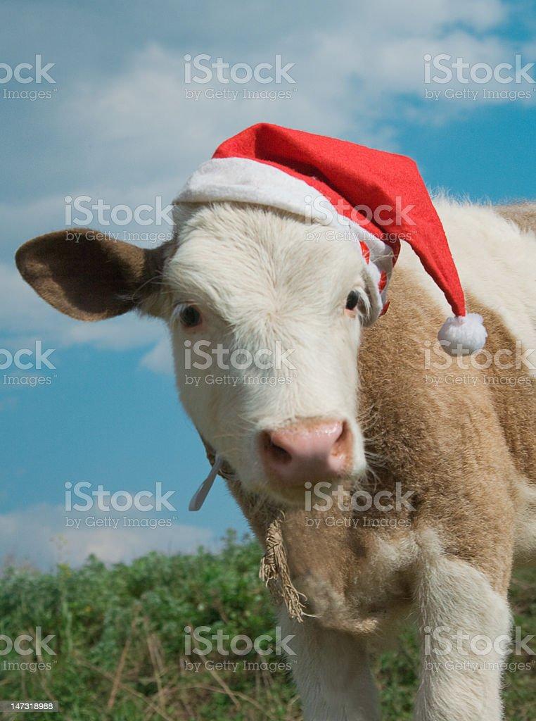 Cow cristmas stock photo