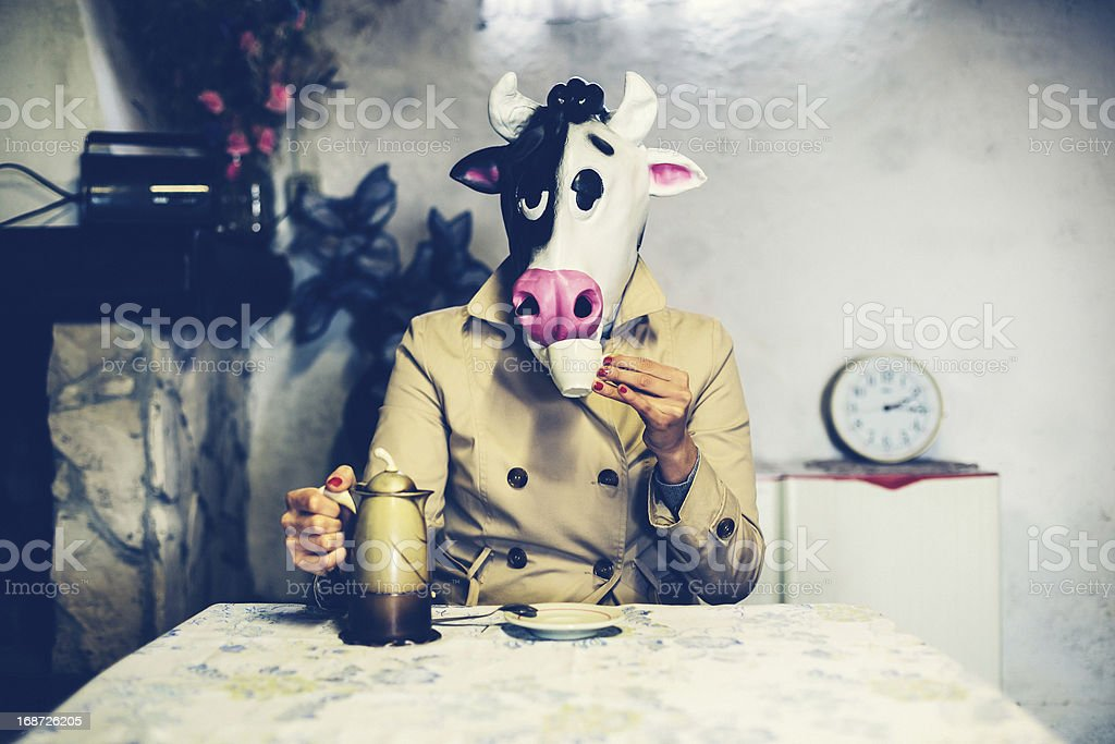Cow Drinking a Coffee stock photo