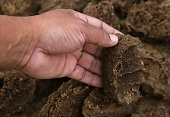 Cow dung as bio fuel