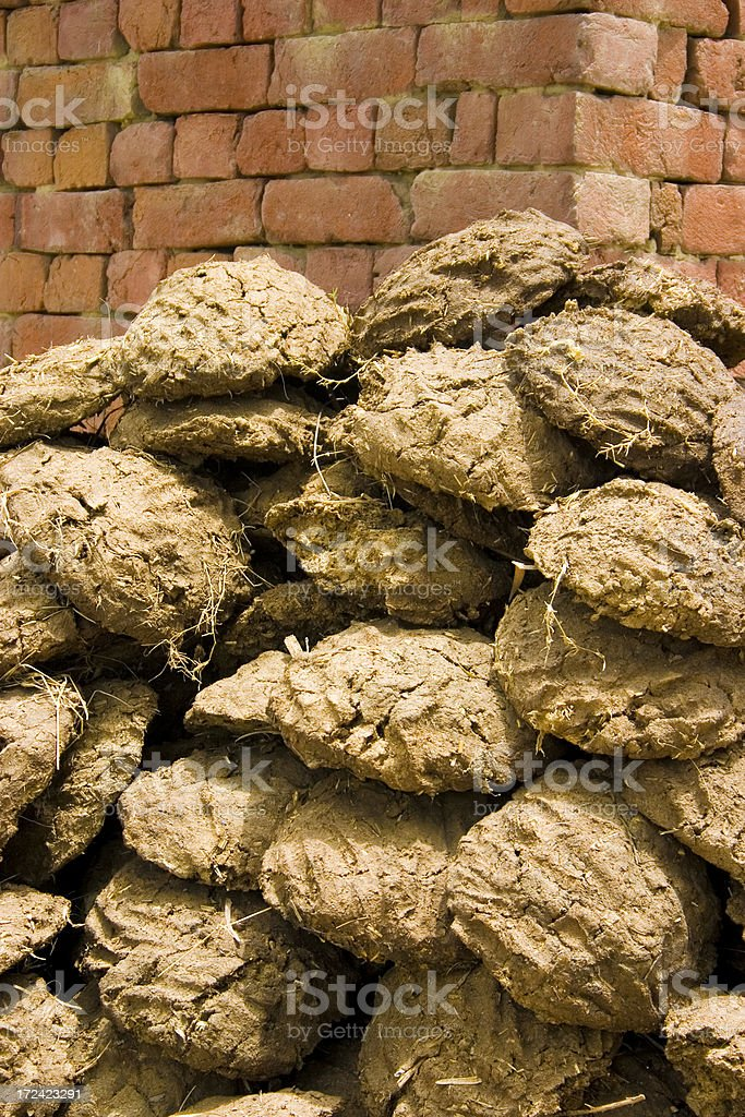 Cow Dung Patties cakes fuel Energy Source to cook food stock photo