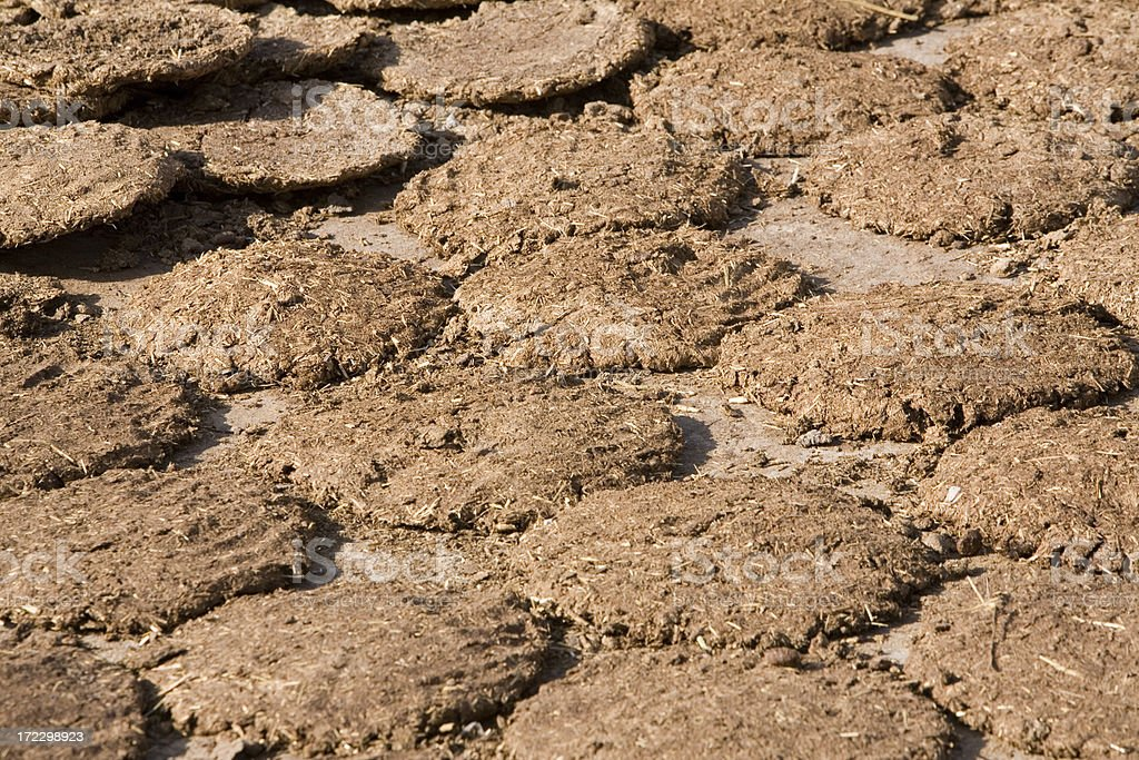Cow dung patties stock photo