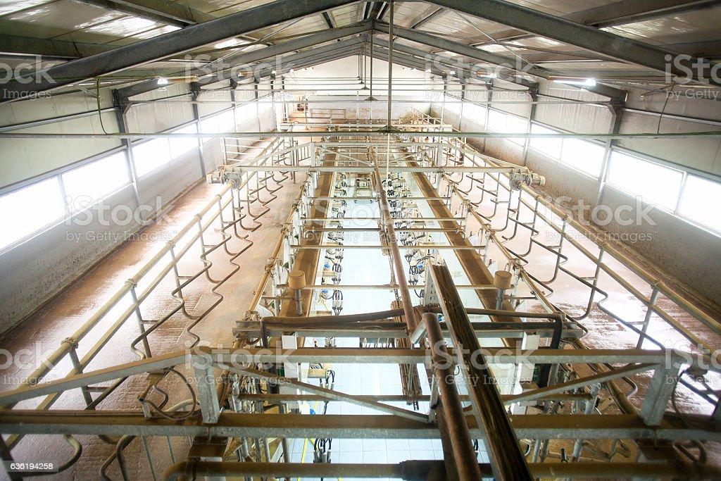 Cow farm milking system stock photo