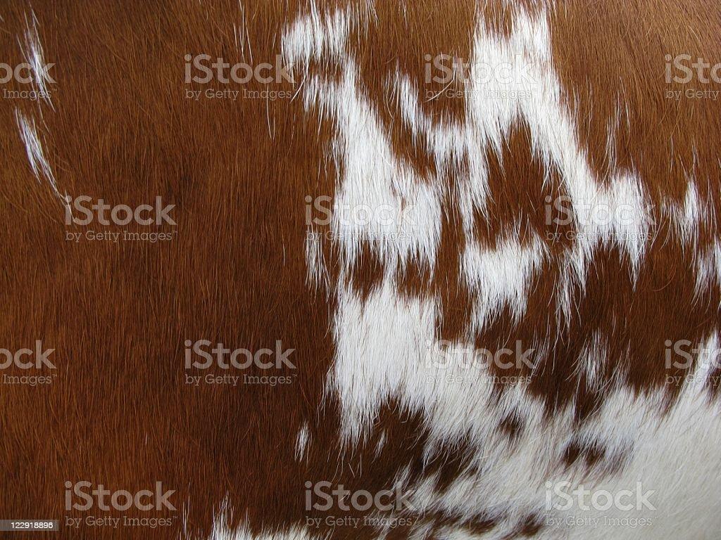 Cow fur royalty-free stock photo