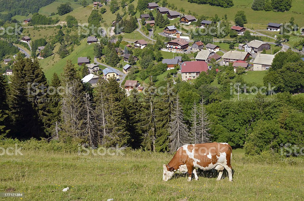 Cow grazing in French Alps stock photo