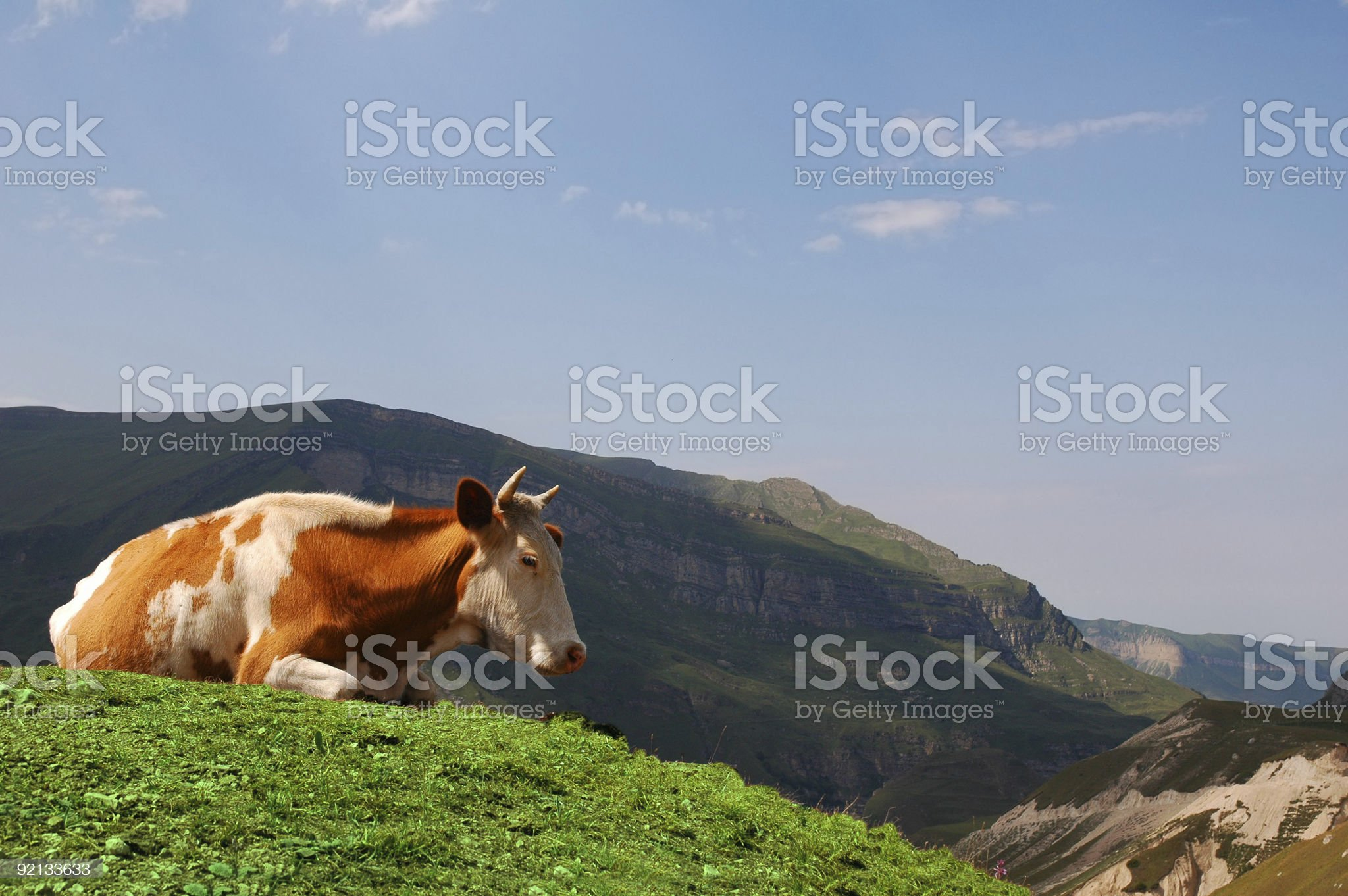 Cow grazing in the mountains royalty-free stock photo