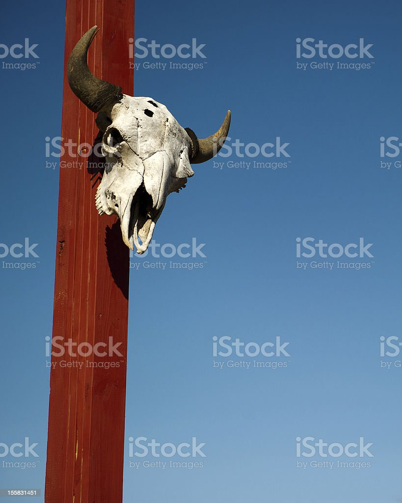 Cow head skull with horns on red post stock photo