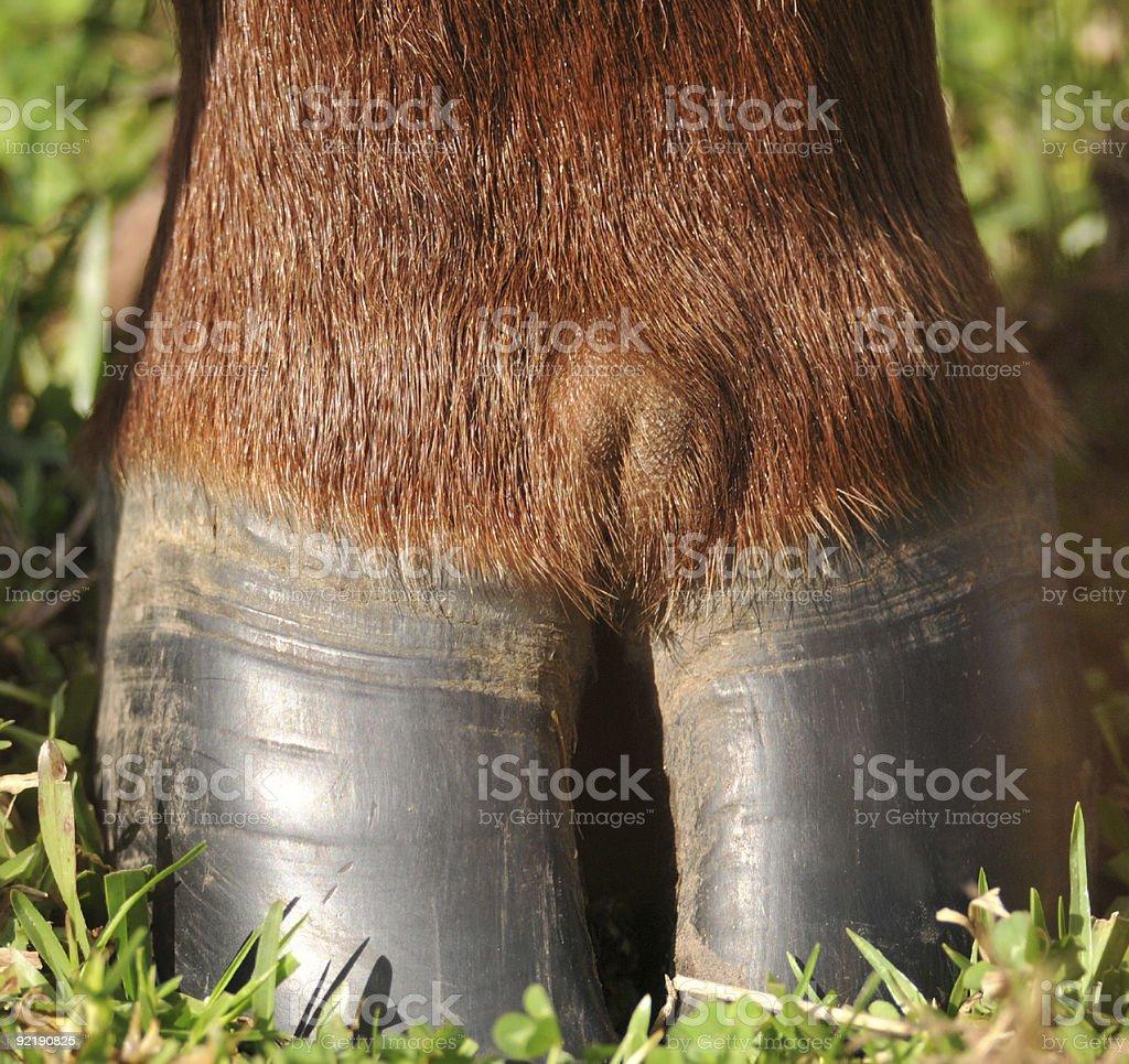 Cow hoof macro stock photo