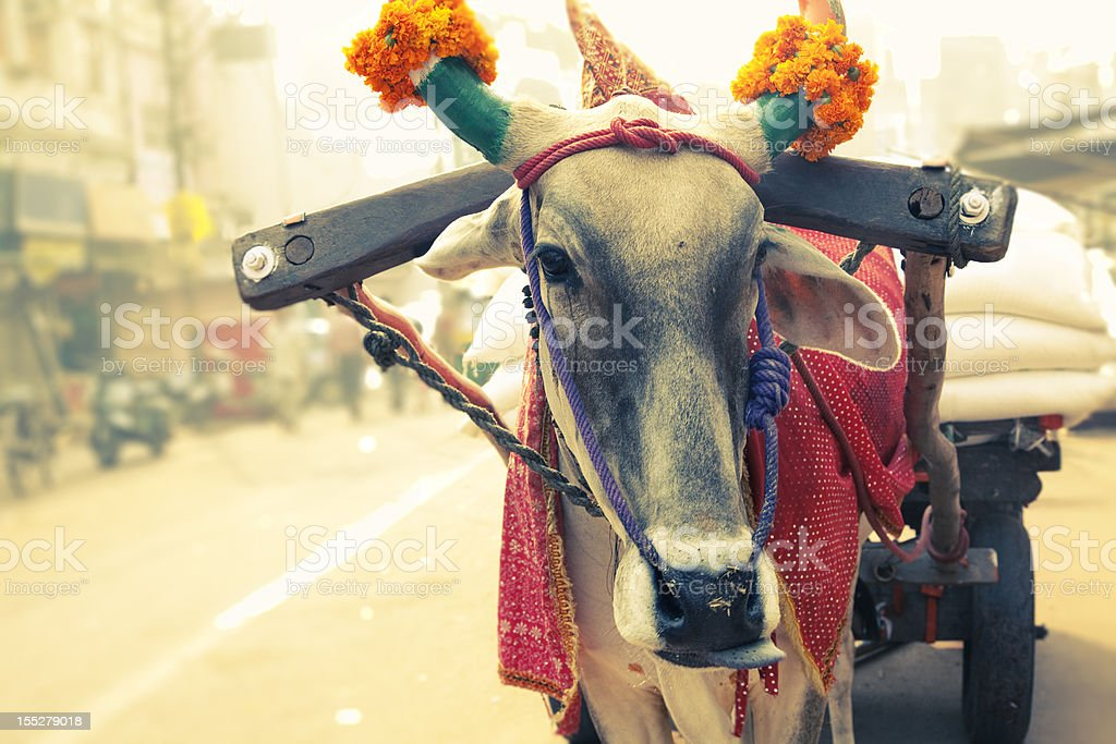 cow  New Delhi, India in front of carriage royalty-free stock photo