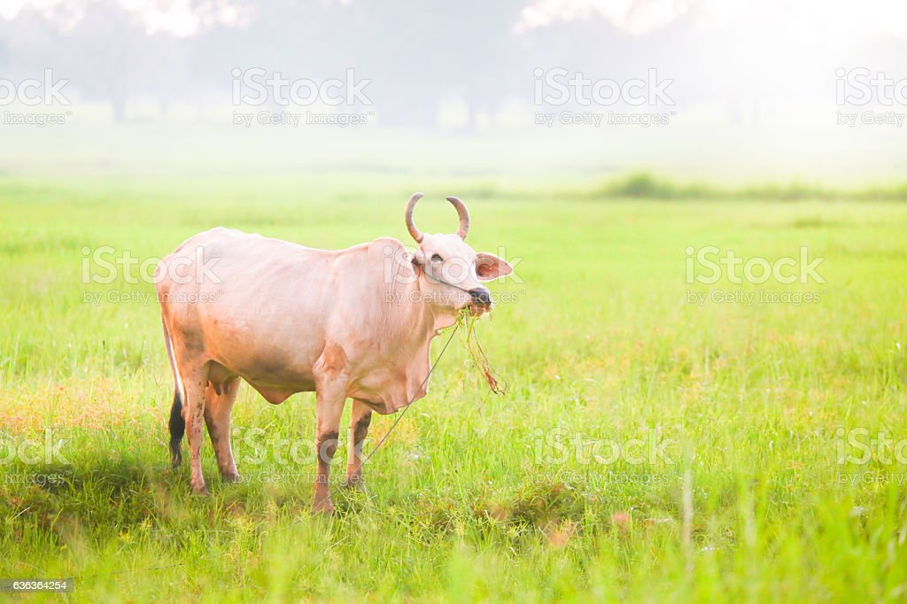 Cow on beautiful landscape. stock photo