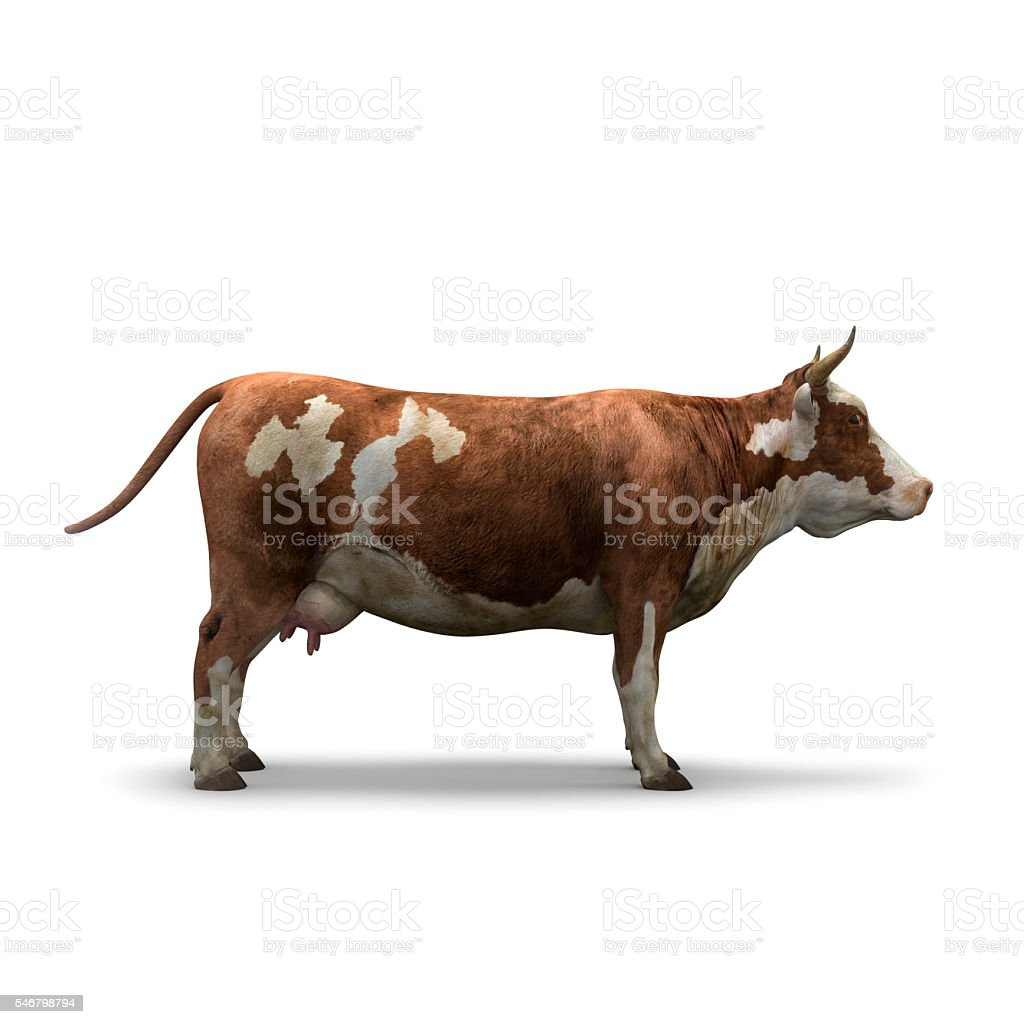 Cow on white background isolated 3d rendering stock photo