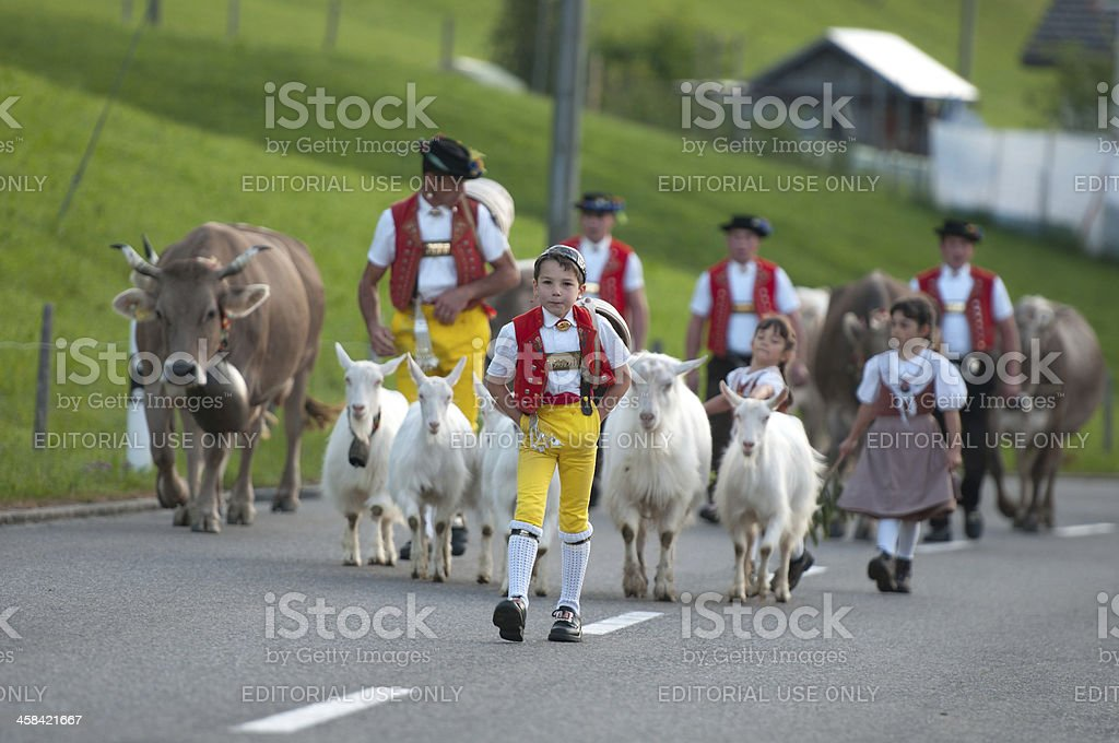 Cow parade royalty-free stock photo