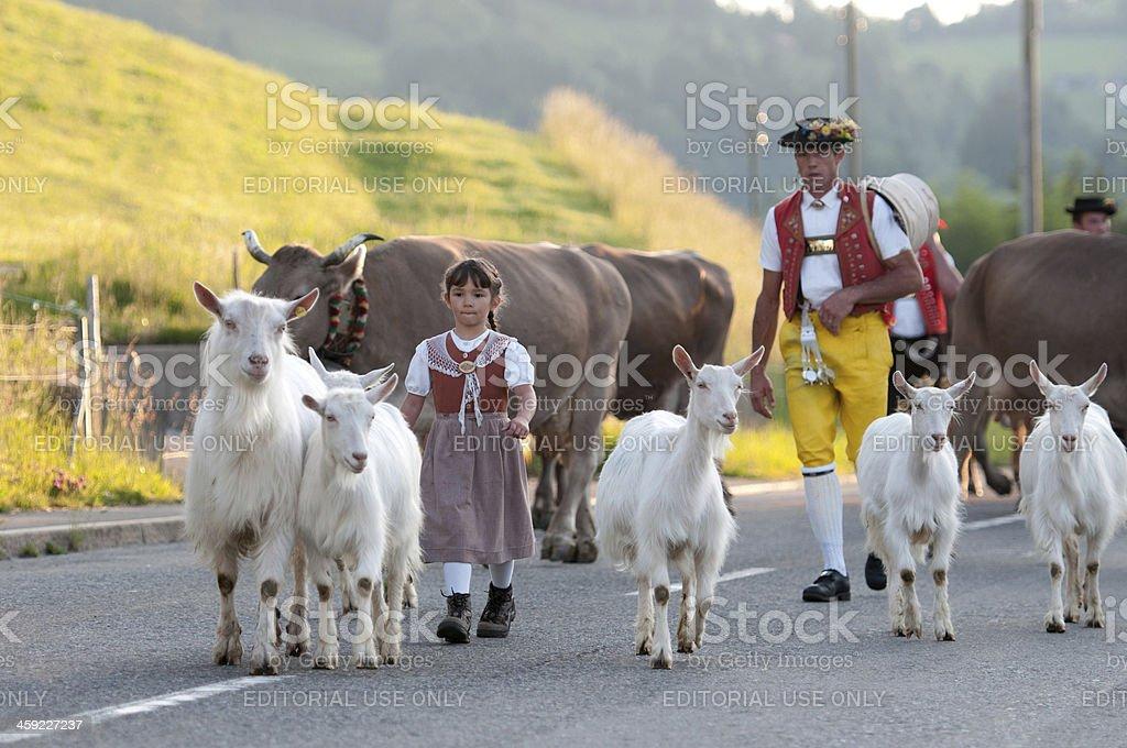 Cow parade stock photo